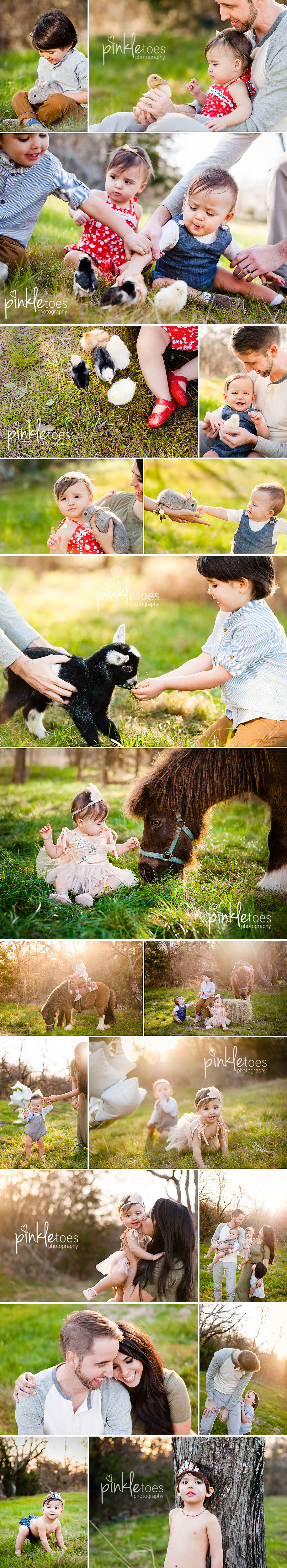 th-pinkle-toes-twins-multiples-austin-photographer-farm-animals-horse-duck-baby-chicks