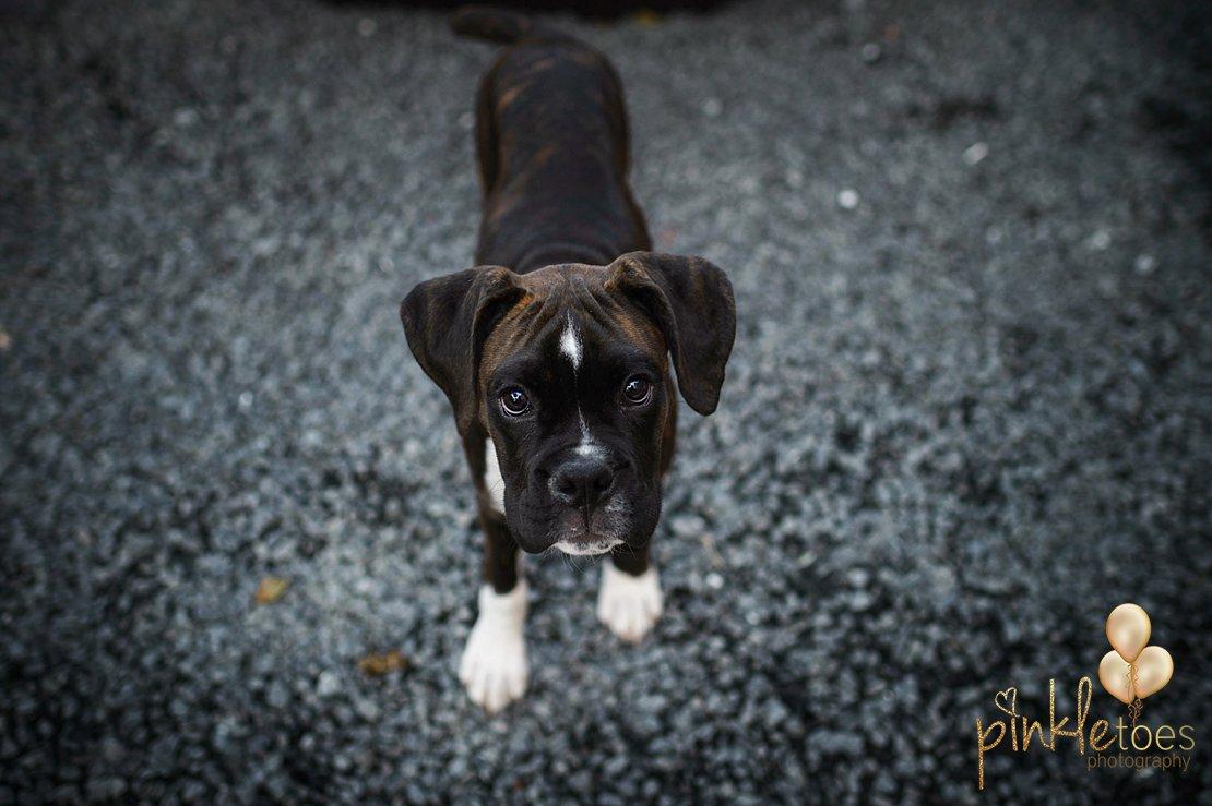 austin-texas-lifestyle-kids-pet-dog-photography-020